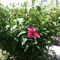 На территории прекрасные цветы