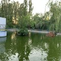 Озеро с утками на территории парка